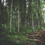 Vente de bois sur pied