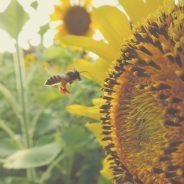 Enquête publique relative au Projet de Programme 2018-2022   du Plan d'Action National de Réduction des Pesticides (NAPAN)