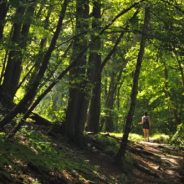 Abattage des arbres : des travaux nécessaires pour la sécurité de tous