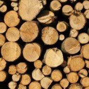 Ventes de bois abattus