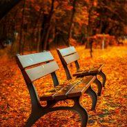 L'automne est de retour et les feuilles mortes aussi !
