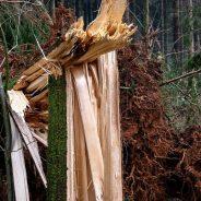 Danger dans les bois