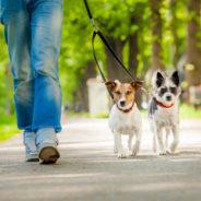 Une balade avec votre animal de compagnie ? Petit rappel…