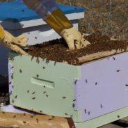 Ruches en faveur des abeilles