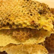Tout savoir sur les bienfaits des abeilles et les produits de la ruche