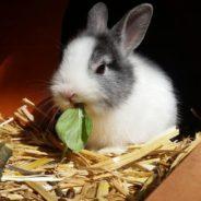Litières écologiques pour vos animaux – Obtenez une prime!