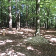 Le parcours Santé du Bois de la Vecquée entièrement rénové