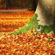 L'automne est à nos portes, vive les feuilles mortes !