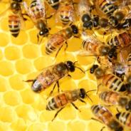 Deux ruches prochainement installées sur le toit de la Cité administrative