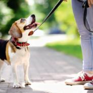 Quelques règles à respecter pour les propriétaires de chiens