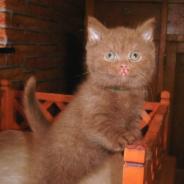 La stérilisation des chats, un acte primordial pour leur survie