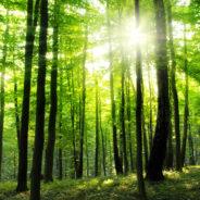 Une réserve naturelle domaniale dans le bois de la Vecquée? La demande va être envoyée à la Ministre de l'Environnement