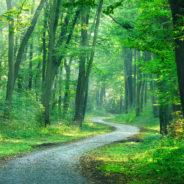 L'abattage d'arbres dangereux, prévu initialement fin décembre 2020/début janvier 2021, débutera ce 9 février