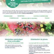 Année de l'arbre: la Ville organise une distribution gratuite de plants