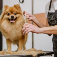 Des toilettages gratuits pour les chiens des plus démunis