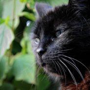 Rappel sur la prime pour les chats stérilisés et pucés et sur la manière de faire stériliser les chats errants sur Seraing