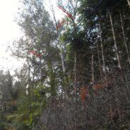 Des arbres élagués et/ou abattus à Seraing: une intervention nécessaire pour la sécurité des passants