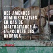 Modification du règlement de police: la Ville veut lourdement sanctionner les personnes maltraitant les animaux