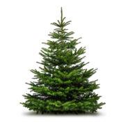 Rappel des dates de collecte pour les sapins de Noël