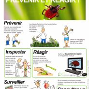 Les tiques: informez-vous pour prévenir des morsures et/ou réagir !