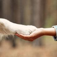 Seraing vote une motion en faveur des chiens d'assistance